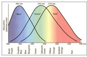 Color Profile Wakapon